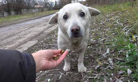 Heartbroken Homeless Dog Finally Get Rescued In The Most Amazing Way