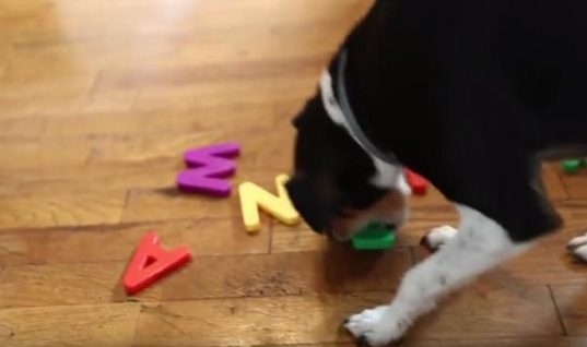 Unwanted Puppy Gets Adopted, Owner Discovers Her Pooch Hides A Special Talent