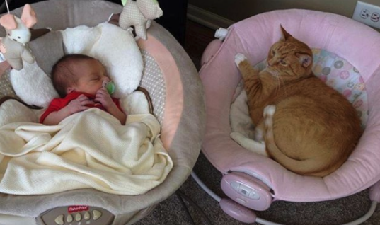 Extraordinary Cat Has Taken The Internet By Storm, Meet Bailey And Witness His Incredible Love For His Human Sisters