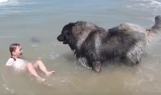 Incredible Moment Shows Dog Dragging Girl To Safety After Sea Wave Crashes Over Her Head