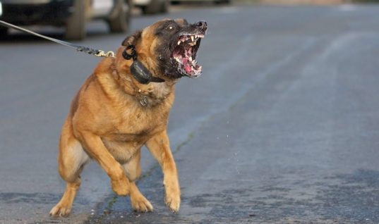 Special Forces Dog Fights Alone With Armed Terrorists To Save 6 Soldiers