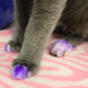 Woman Adopts A Cat At Shelter, But When She Sees His Purple Paws She Immediately Calls Police