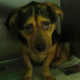 Couple Adopt Saddest Looking Dog From Shelter, Just Look At His Smile Now