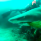 Scuba Diver Sees Shark Trapped In Net, Risks His Life To Save The Shark