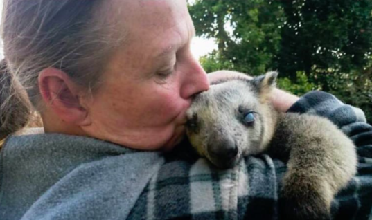Woman Sees A Blind Tree Kangaroo Being Attacked By Dog And Saves Its Life, Thankful Animal Won't Stop Hugging Her