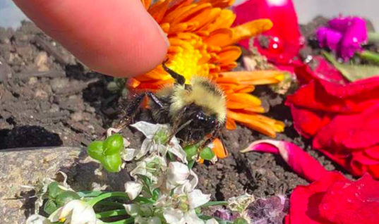 Rescued Bee Becomes Woman's BFF, Now They Share High-Fives Daily