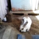 Woman Couldn't Understand Why Her Rabbit Was Digging Frantically, But Then A Hand Reaches Out Asking For Help