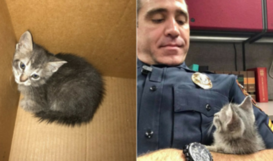 Cop Takes Stray Kitten On A Ride Along And Ends Up Adopting Her