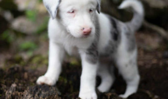 Owner Hears Deaf Puppy Cry, When She Looks Down Finds Her In A Massive 35 feet Hole